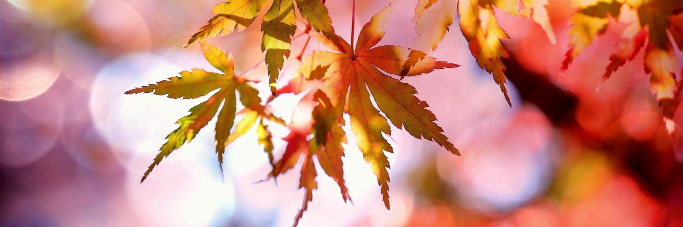 浪漫暖秋 漫遊花蓮