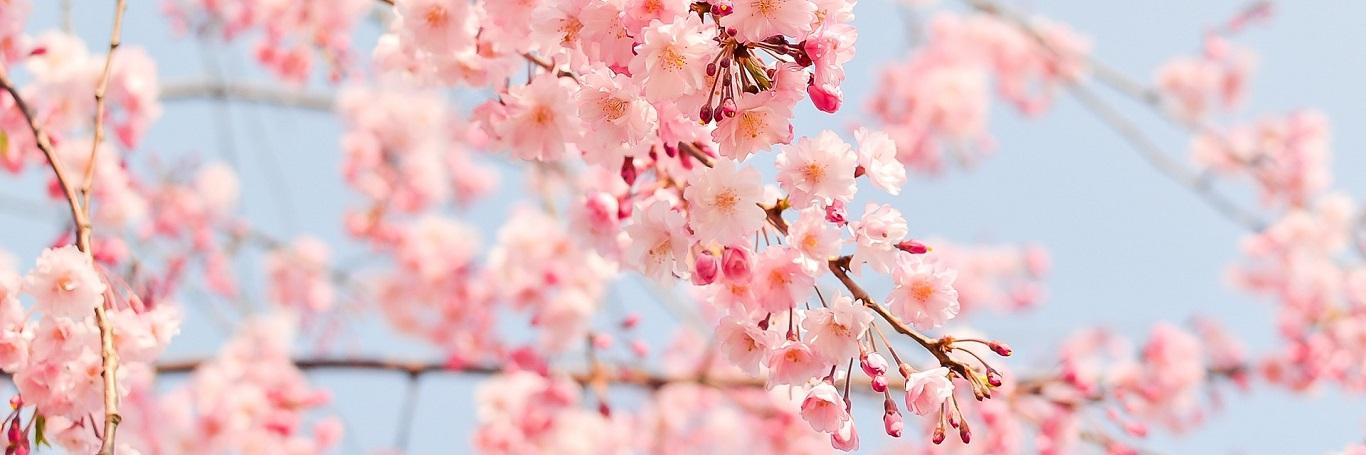3/13-4/7春季線上旅展